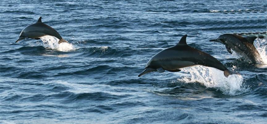 Lovina dolfijnen safari