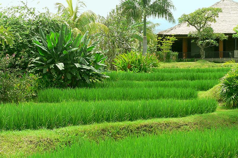 Villa Bali Breeze ligt in een groene sawa op een heuvel boven Lovina
